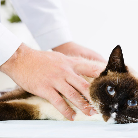 Caring vet with cat