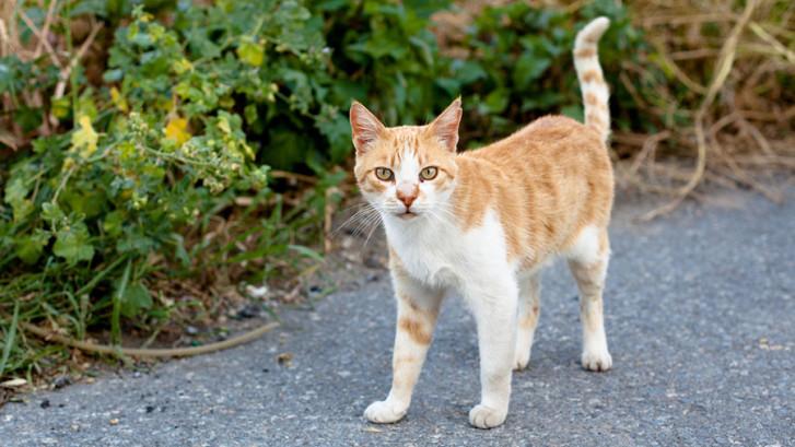 Feline Chronic Kidney Disease Ckd Perth Cat Hospital Perth Cat Vets
