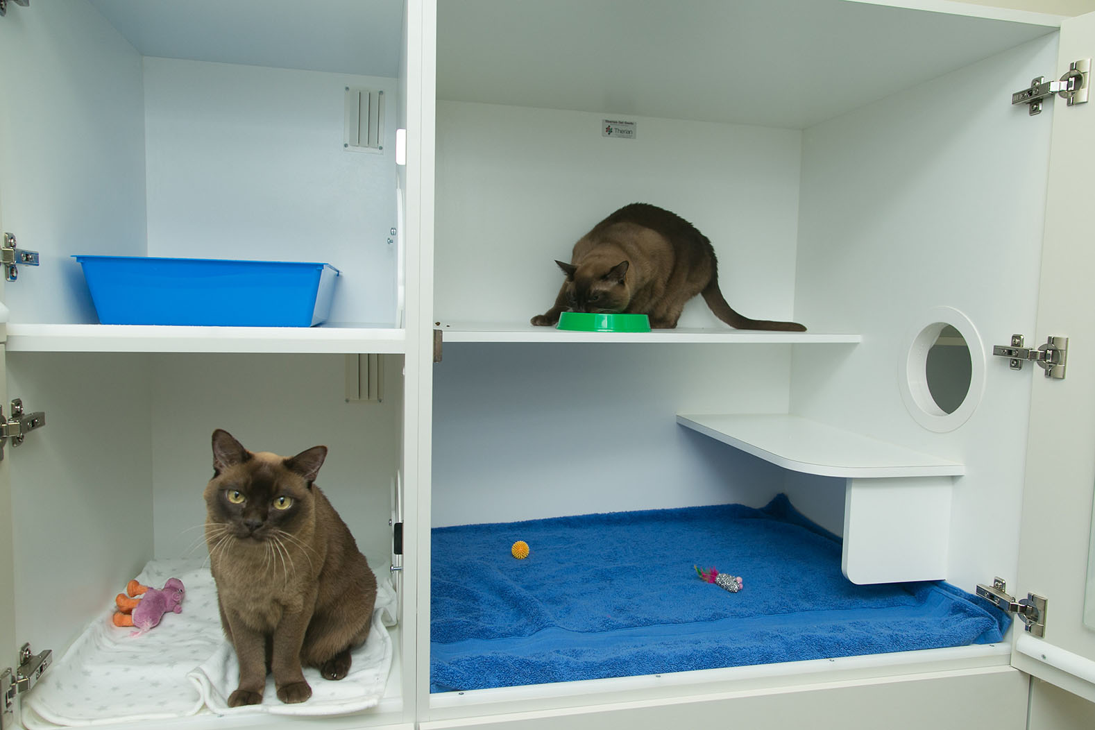 Kitty Day Care Amp Cat Hotel Perth Cat Hospital Cat Boarding