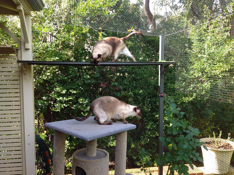 cat parks cat runs and cat enclosures perth cat hospital